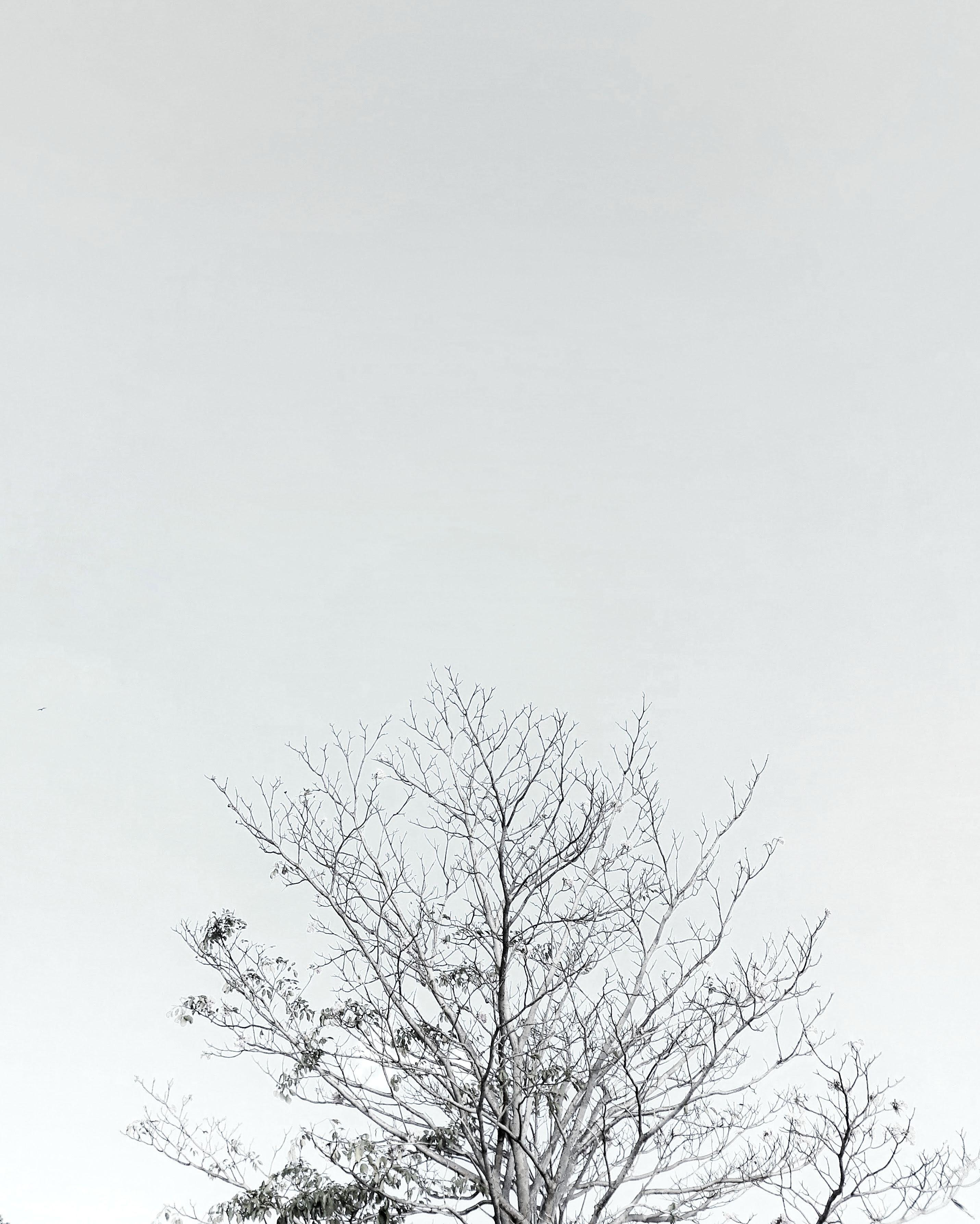 Wow 30 Background Warna Hitam Putih Keren - Koleksi Rial