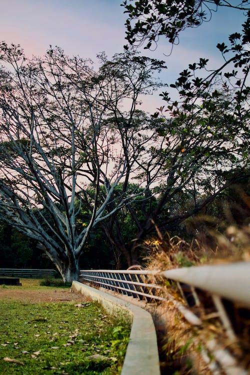 Photos gratuites de arbre, balustrade, branches d'arbre, brillant