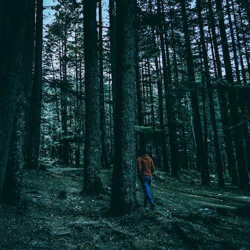 Foto d'estoc gratuïta de arbres, bosc, boscos, d'humor variable