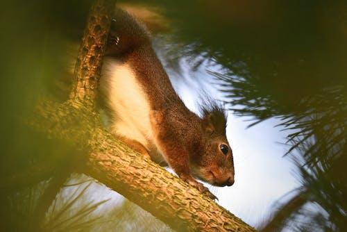Foto d'estoc gratuïta de animal, animals bufons, arbre, bellesa a la natura