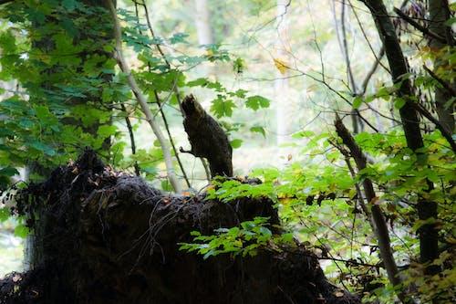 Gratis arkivbilde med natur, skog, trær, tre