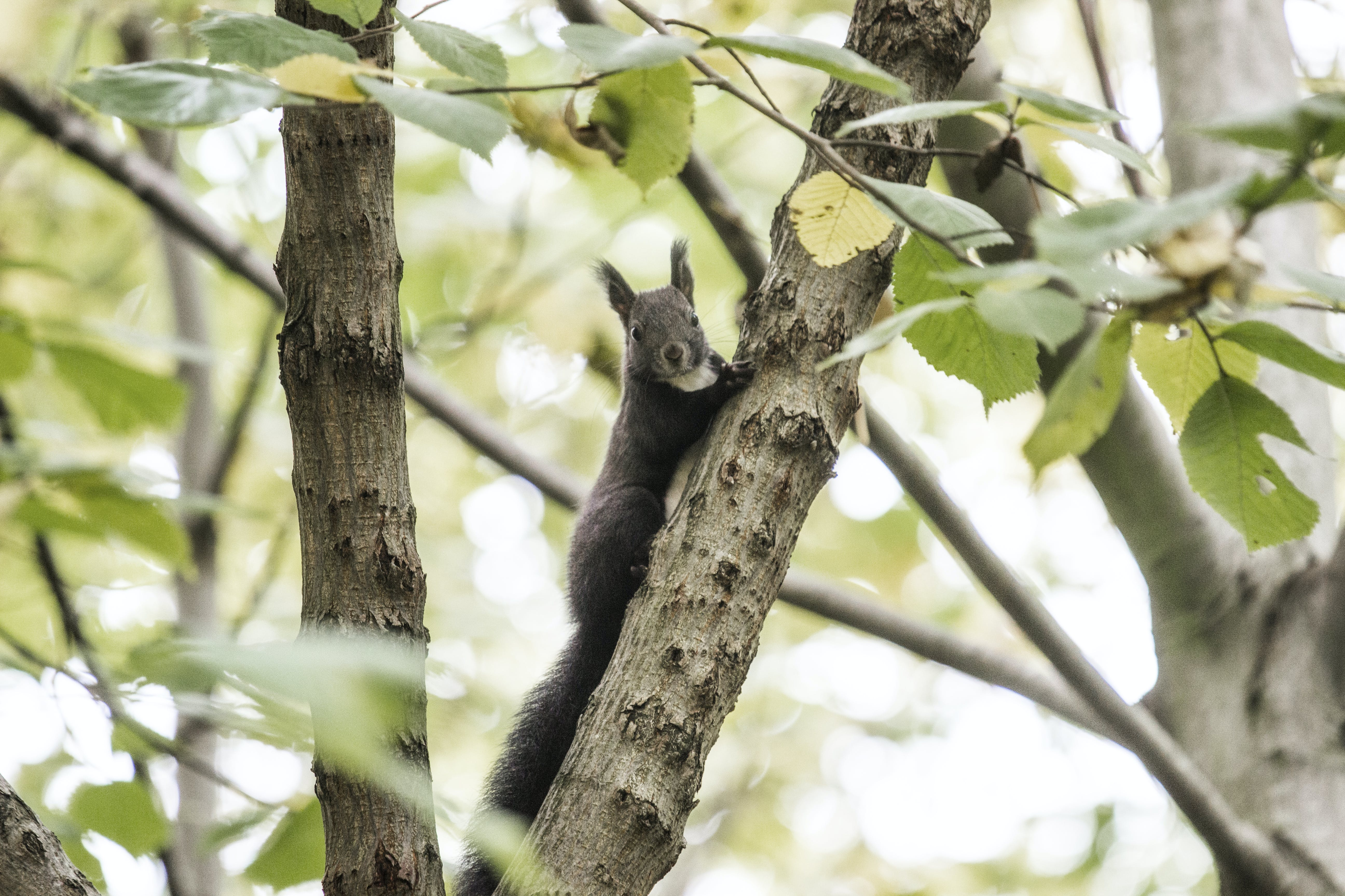 Free stock photo of autumn, autumn forest, forest, squirrel