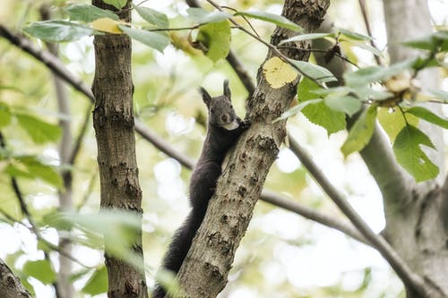 Free stock photo of autumn forest, forest, squirrel