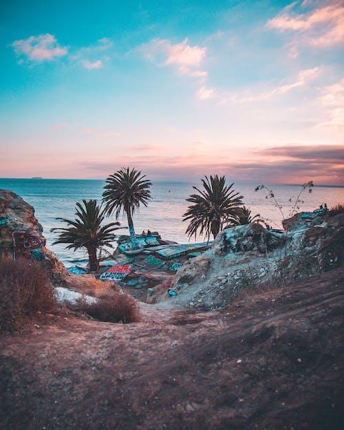 Immagine gratuita di alba, alberi di cocco, ambiente, cielo