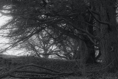 Gratis arkivbilde med autum skog, mørke trær, skog