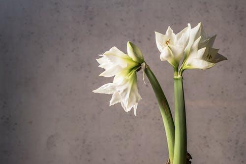 增長, 微妙, 植物, 植物群 的 免费素材照片