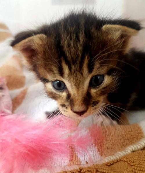 Gratis stockfoto met #cat #kitten #cute