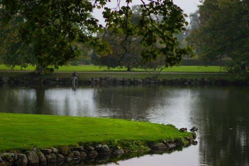 Gratis arkivbilde med hage, slott, slott innsjø