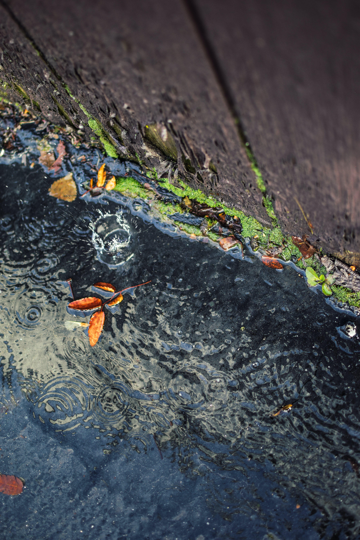 Free stock photo of after the rain, autumn leaf, rain, raining