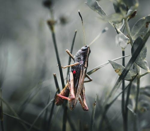 alan derinliği, böcek, bulanıklık, çevre içeren Ücretsiz stok fotoğraf