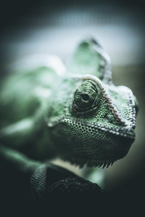 녹색, 눈, 동물, 매크로의 무료 스톡 사진