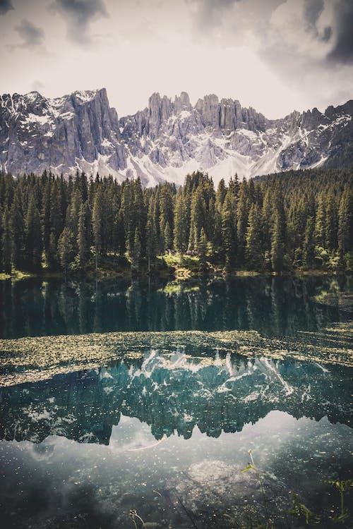 คลังภาพถ่ายฟรี ของ การสะท้อน, ความเป็นป่า, ต้นไม้, ท้องฟ้า
