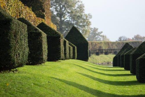 Gratis arkivbilde med botanisk hage, egeskov, slott, slotthage