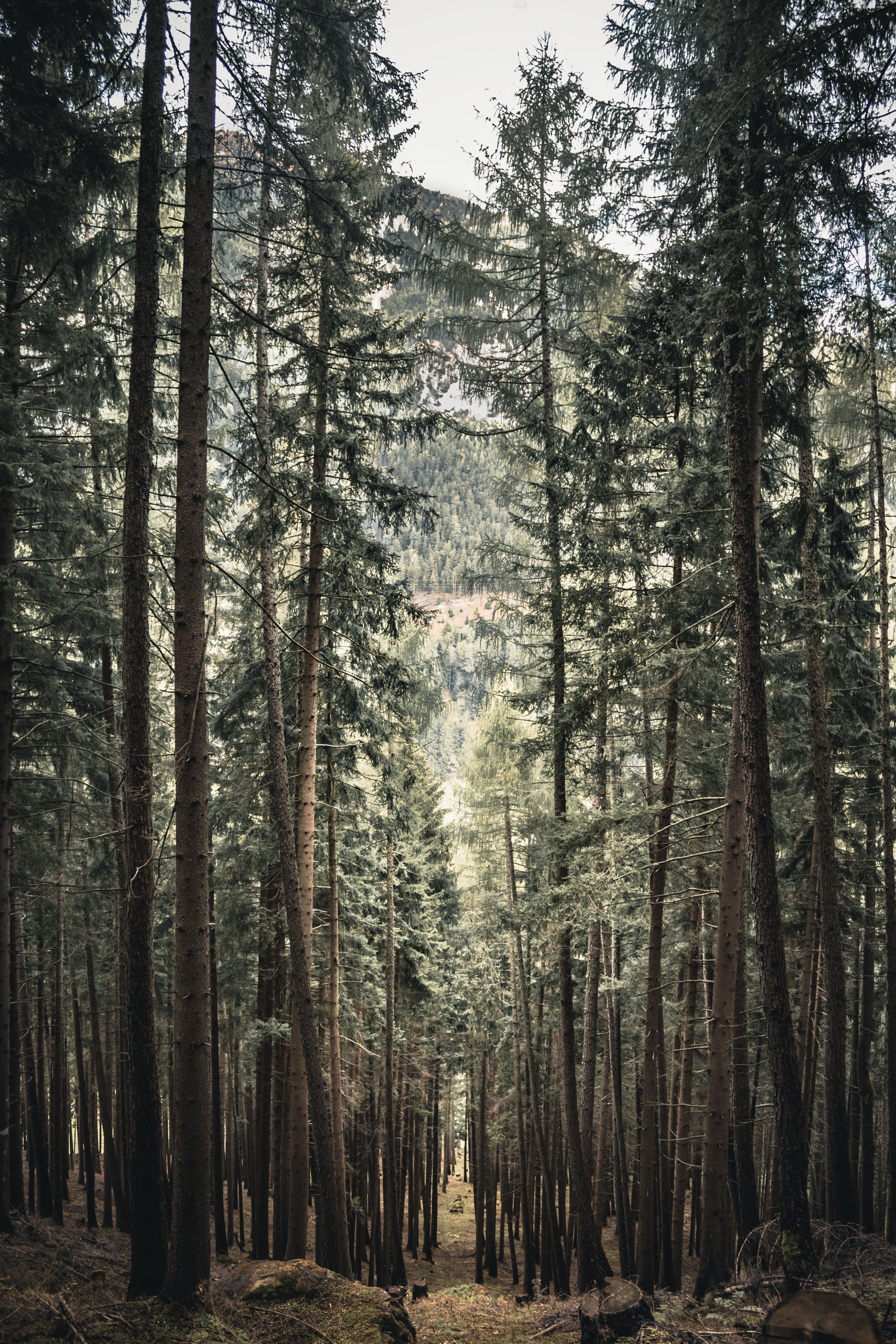 Základová fotografie zdarma na téma denní světlo, dřevo, flóra, hora