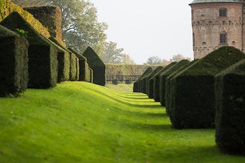 Gratis arkivbilde med egeskov, slott, slotthage
