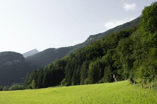 Free stock photo of austrian mountain, green mountain, mountain