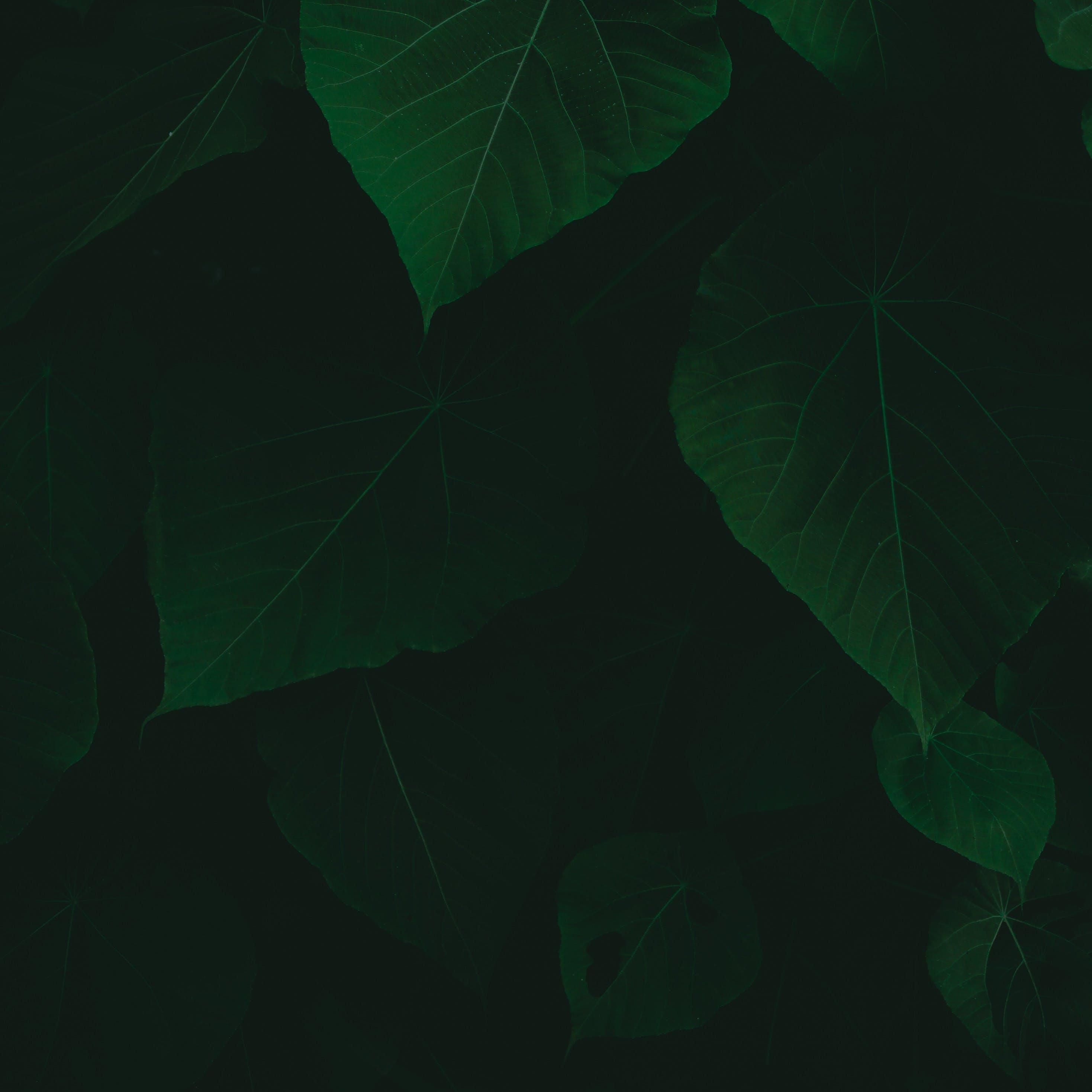 Gratis arkivbilde med frodig, løvverk, miljø, mørk