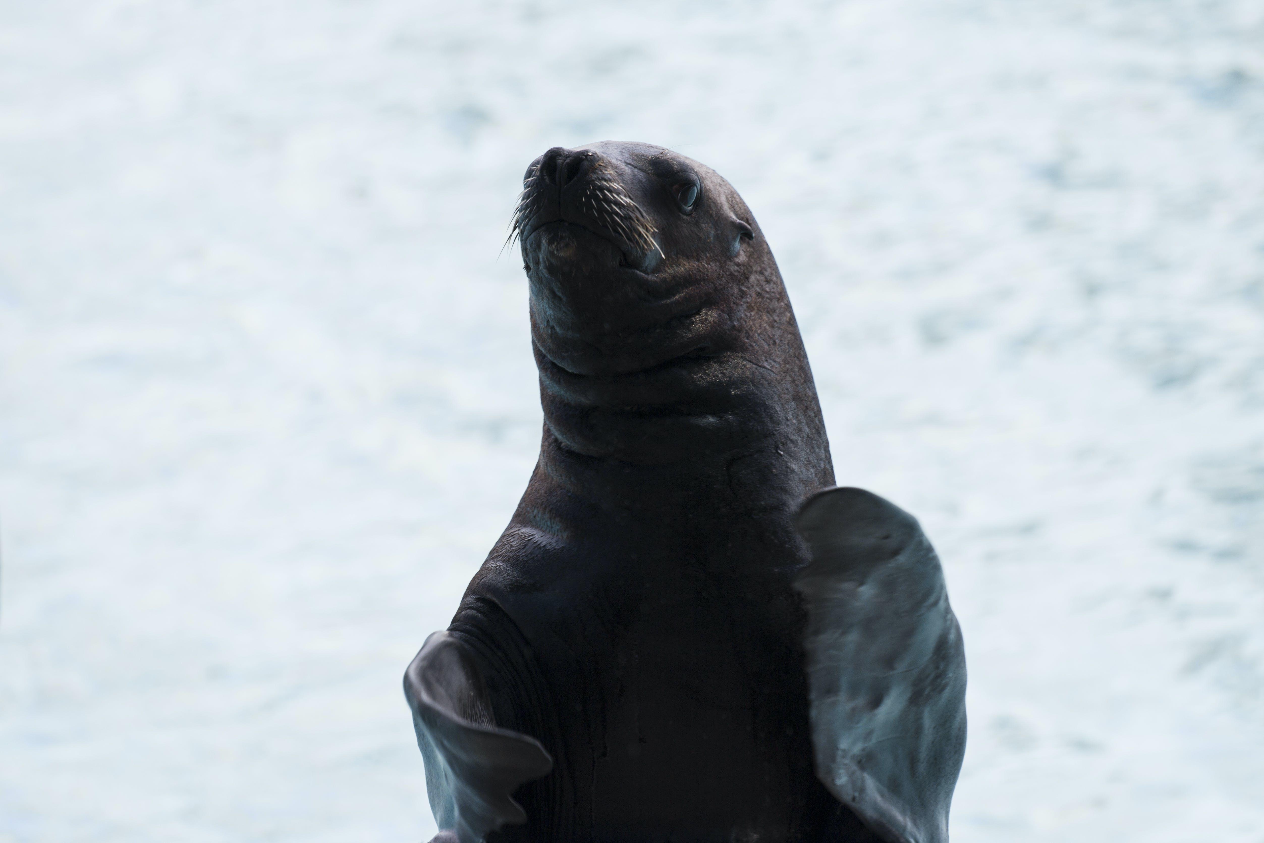 물개, 바다표범의 무료 스톡 사진