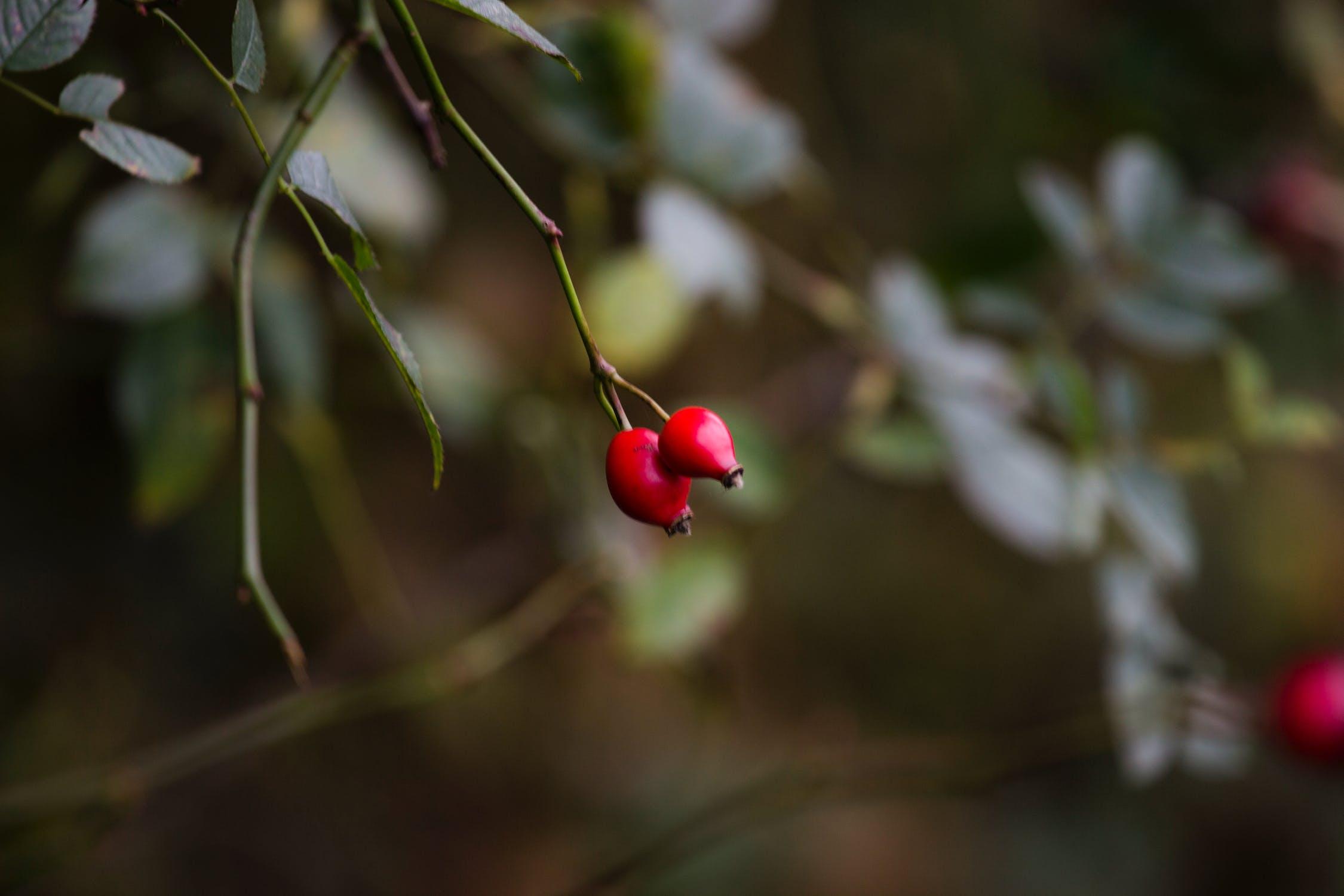 пряные вкусные красная ягода в лесу фото круг