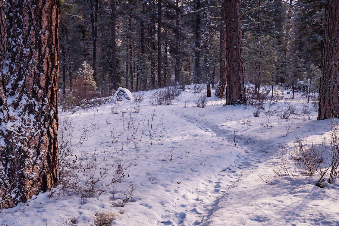 burza śnieżna, drzewa, dzień