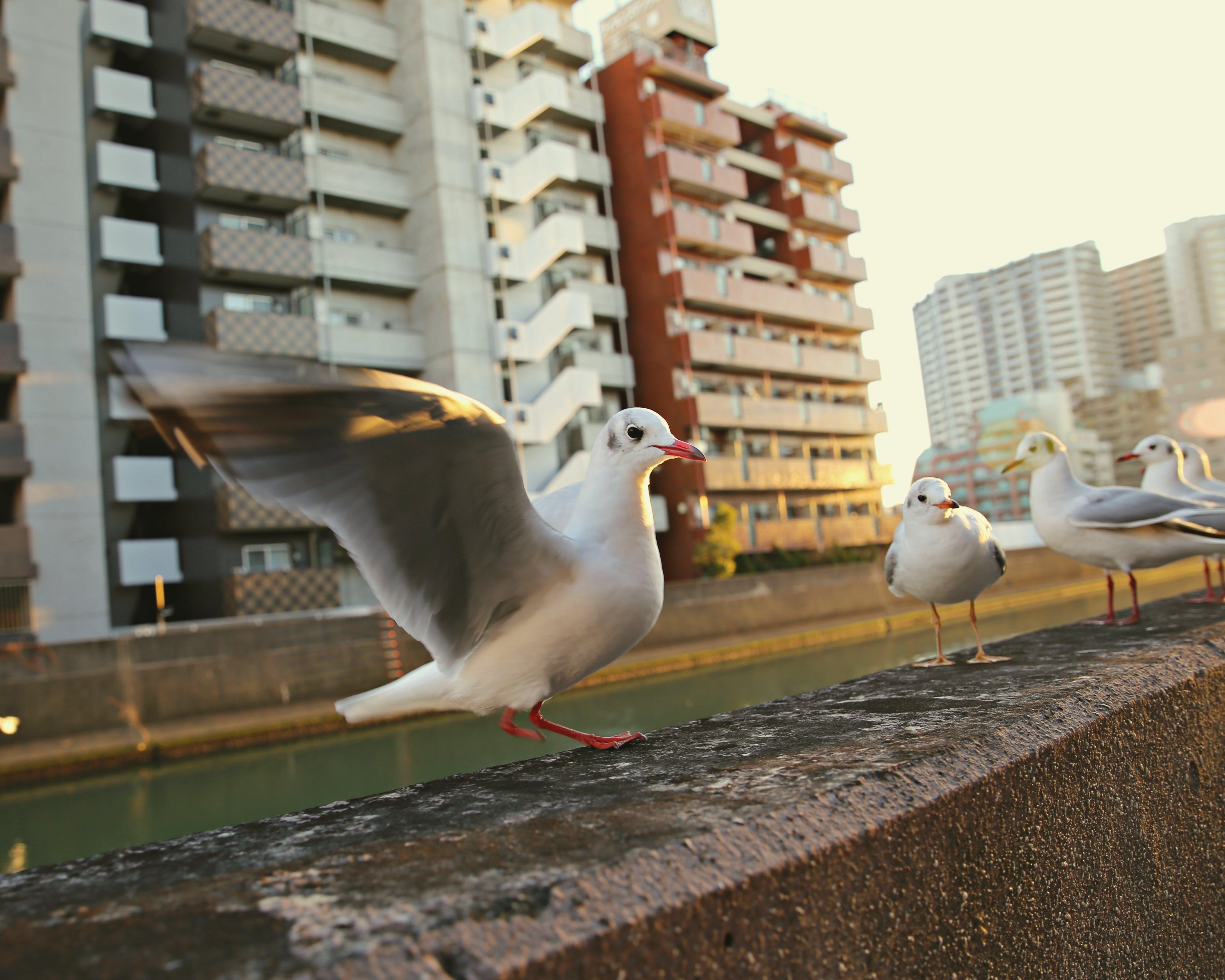 Free stock photo of CanonPhoto