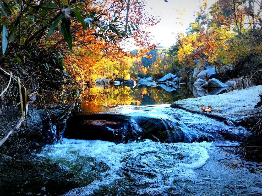 Free stock photo of nature, stream, trail