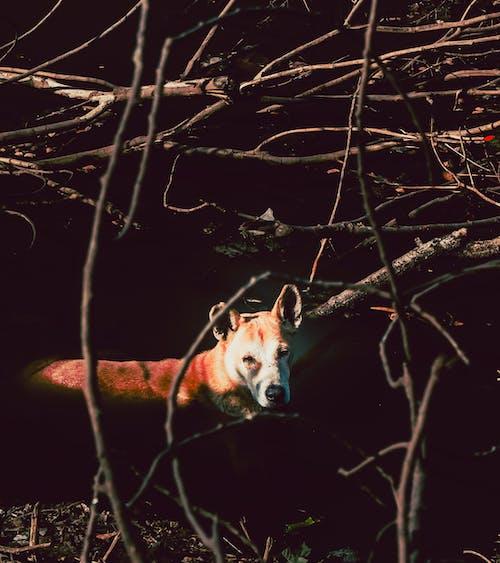 Ilmainen kuvapankkikuva tunnisteilla eläin, Hassu, hauska, kesä