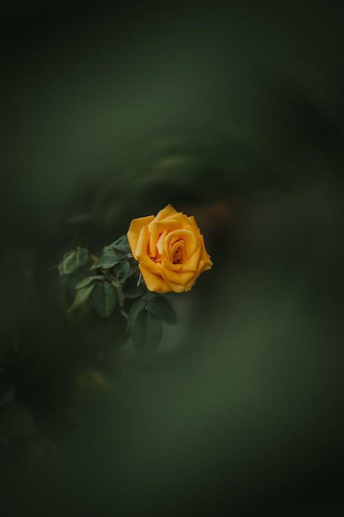 Бесплатное стоковое фото с апельсин, глубина резкости, завод, красивый