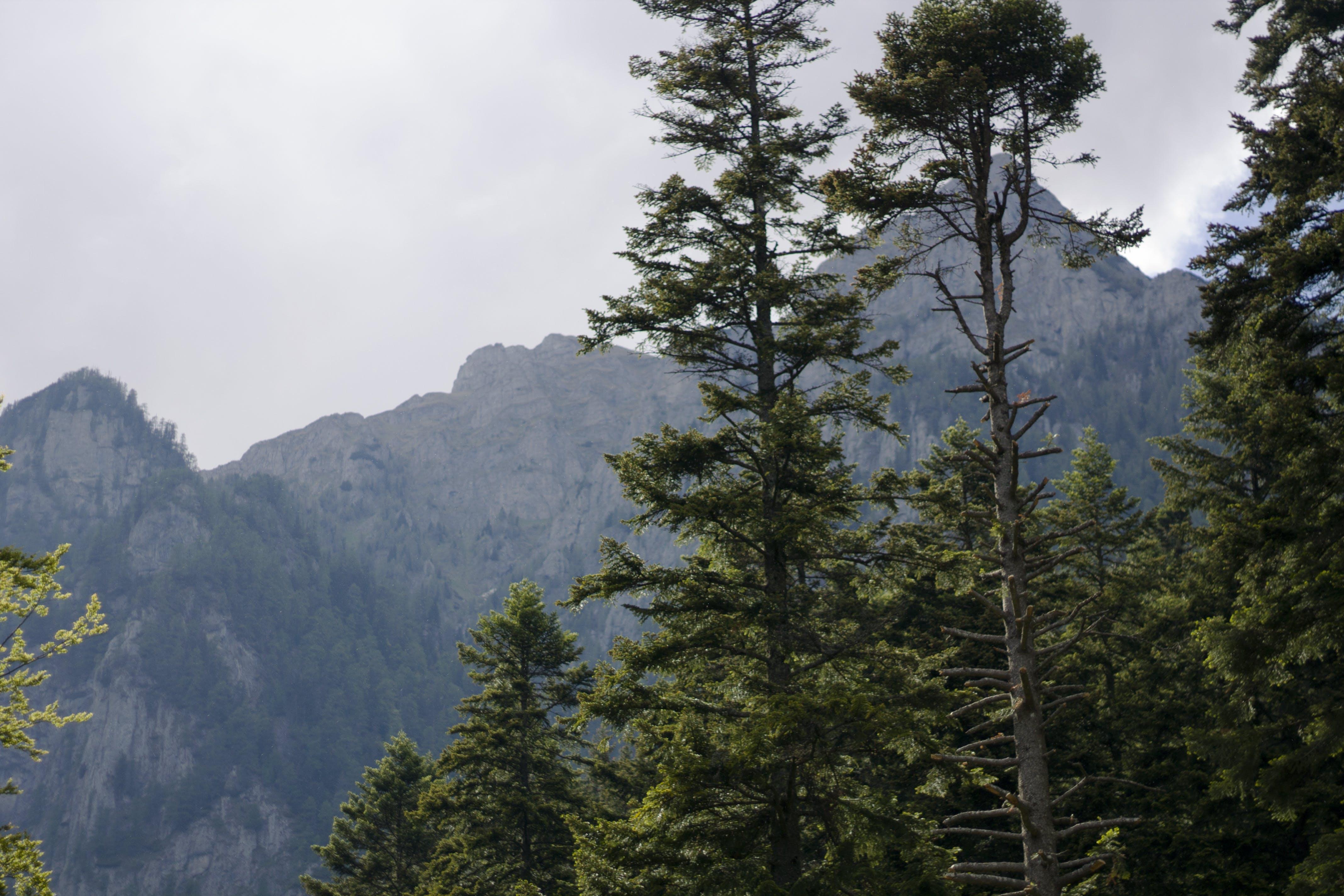 Foto d'estoc gratuïta de bosc, muntanyes, muntanyes blaves, muntanyes catàpides