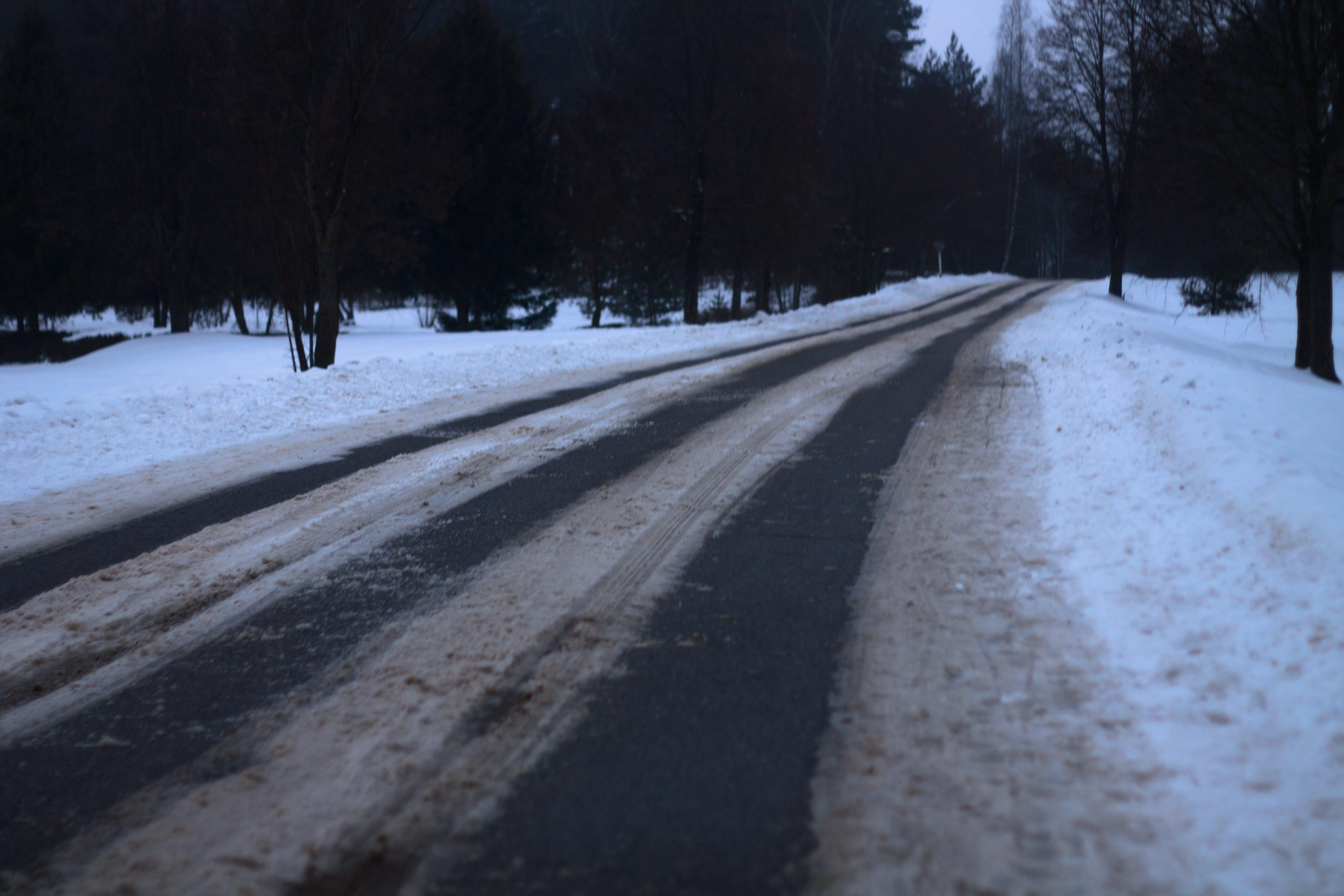 Foto d'estoc gratuïta de bosc, carretera, fusta, hivern
