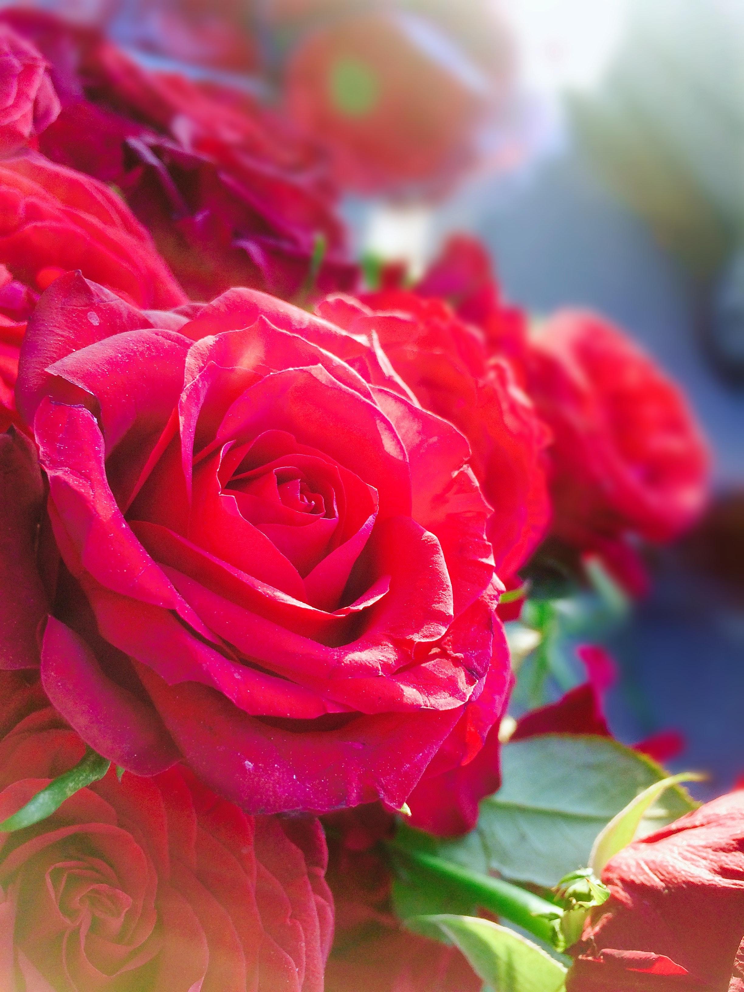 Foto Stok Gratis Tentang Alam Bunga Yang Indah Bunga Bunga Indah