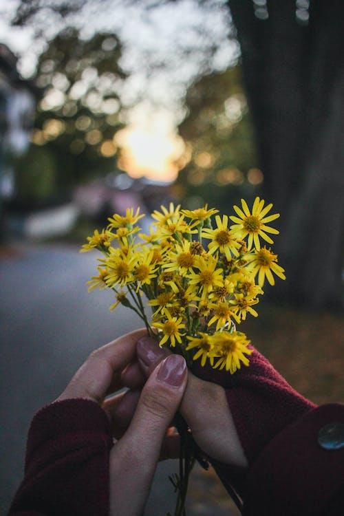 Fotobanka sbezplatnými fotkami na tému detailný záber, divé kvety, flóra, jemný
