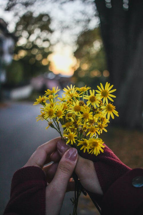 Photo of Woman's Hands Holding Stinking Willie Flowers