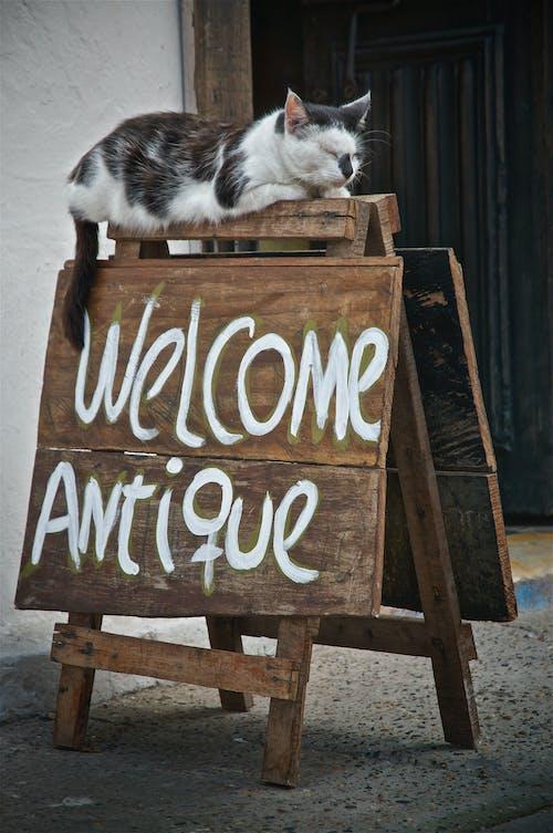 Бесплатное стоковое фото с Антикварный, кошка