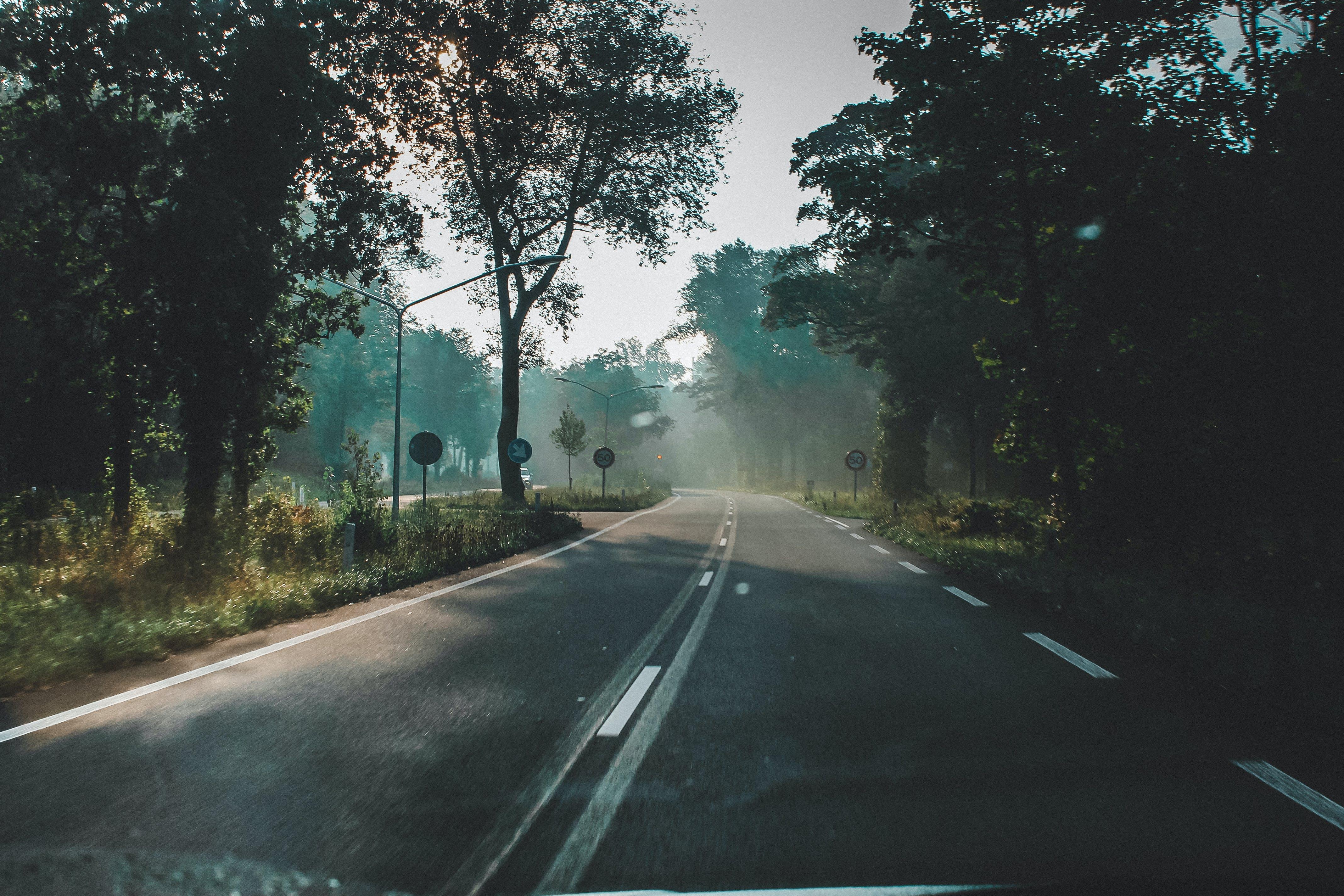 Ingyenes stockfotó aszfalt, autózás, fák, fény témában