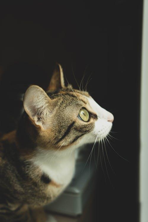 おもしろい, かわいらしい, キティ
