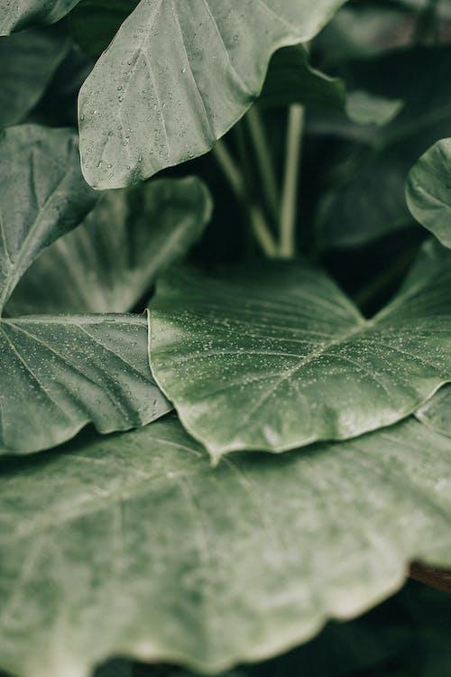 나뭇잎, 매크로, 무성한