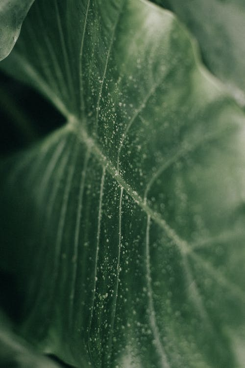 Macro Photography of Leaf