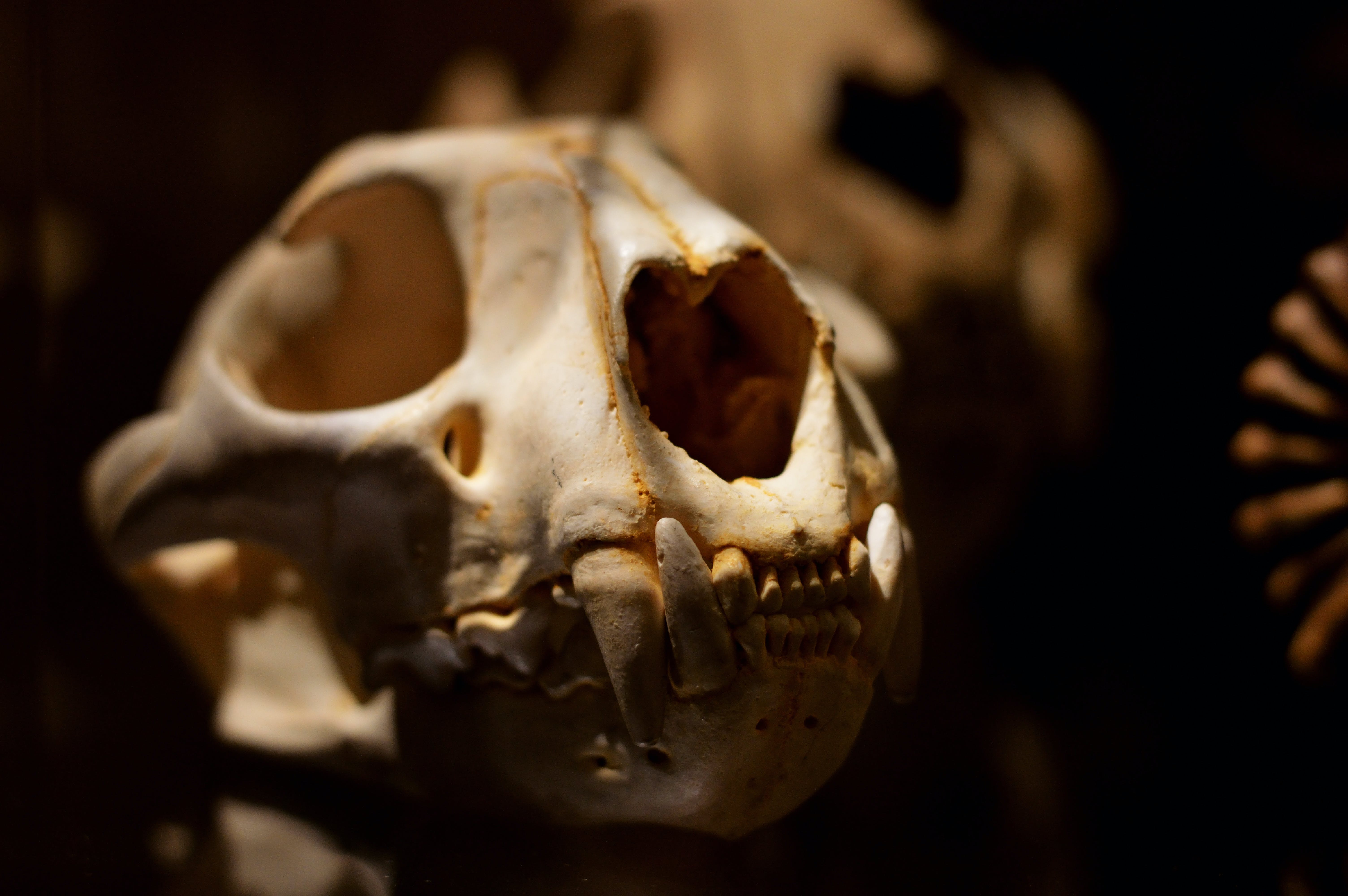 Kostenloses Stock Foto zu anatomie, ausbildung, biologie, kiefer