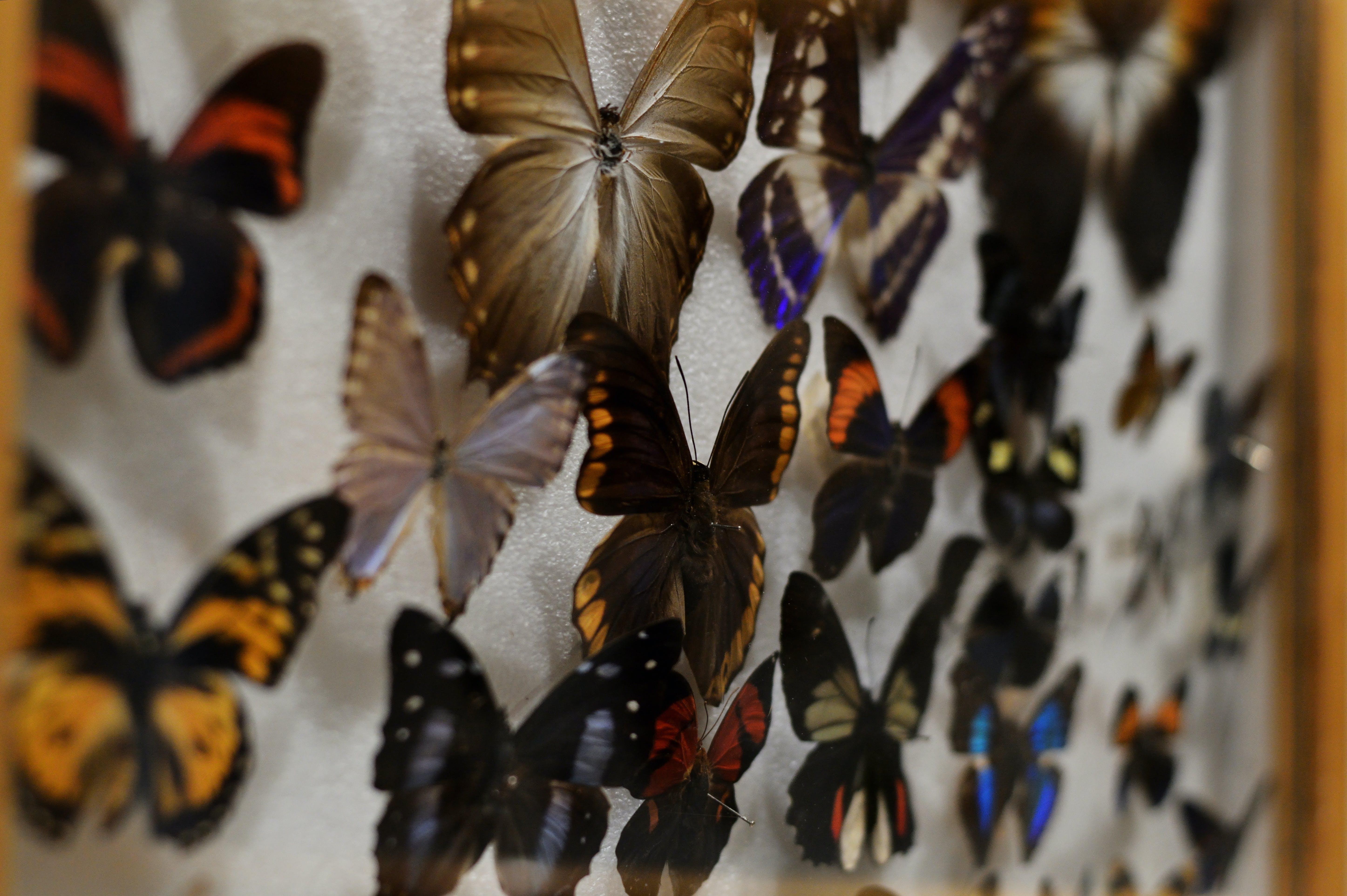 Kostenloses Stock Foto zu biologie, box, bug, entomologie