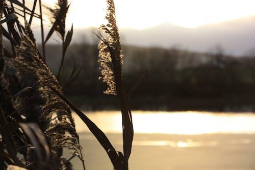 Free stock photo of bird sign, burgundy, evening, golden hour