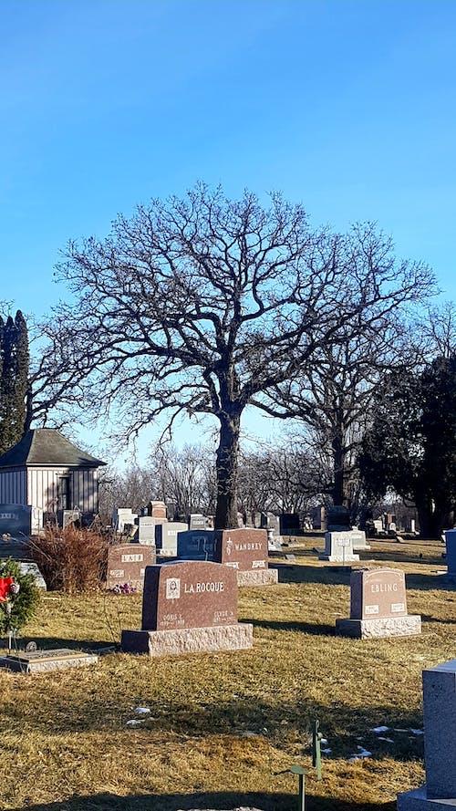 Gratis stockfoto met #begraafplaats #boom