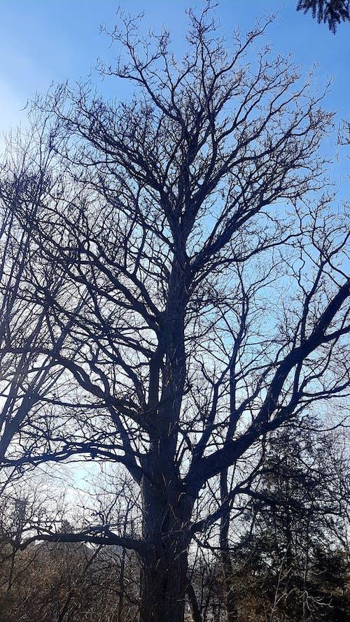 คลังภาพถ่ายฟรี ของ #ต้นไม้