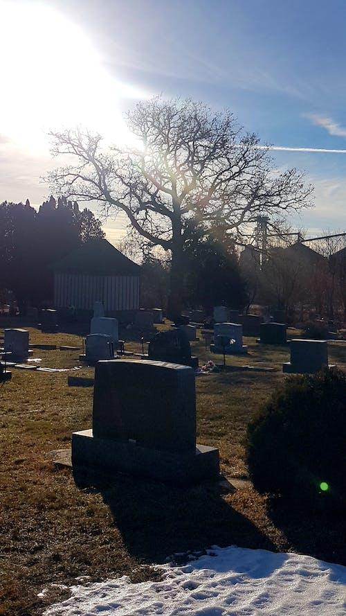 คลังภาพถ่ายฟรี ของ #cemetery #grave #tree