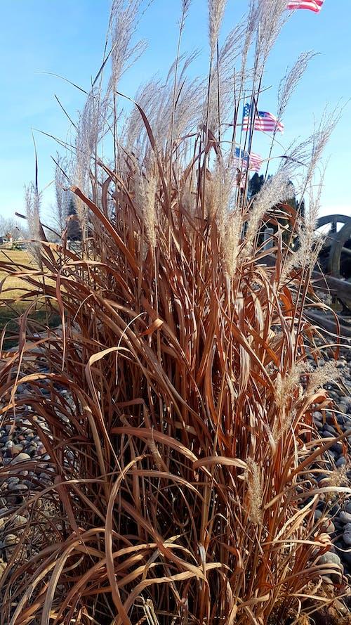 คลังภาพถ่ายฟรี ของ #grass #fall #usa #flag