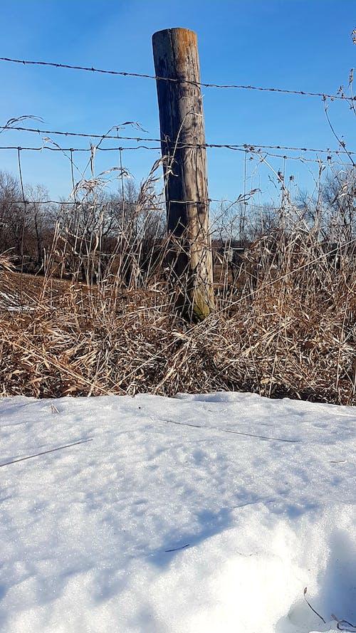 คลังภาพถ่ายฟรี ของ #nature #fence #post #snow #barbwire