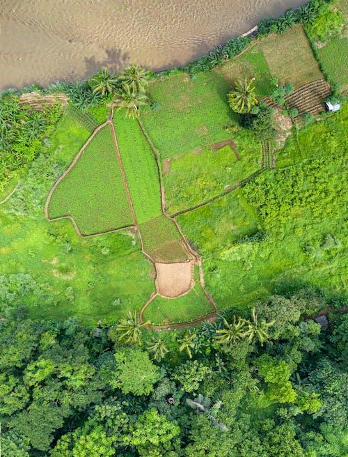 Bird's Eye View of Green Farmland Landscape