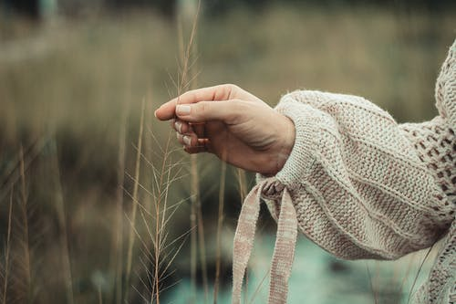 Person Holding Dried Plant
