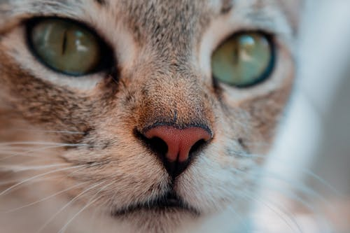 Free stock photo of adorable, animal, cat