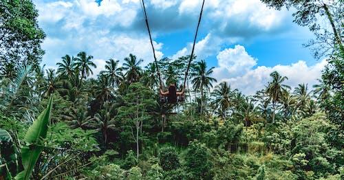 Бесплатное стоковое фото с Бали, бали качели, балийский, вид сзади